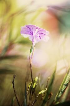 ピンクと紫の花。ソフトフォーカスとビンテージトーン。