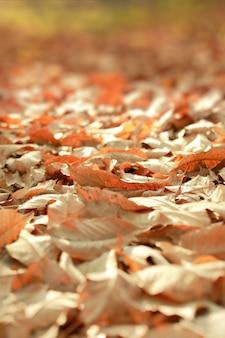 地面の乾燥した葉、美しい秋の森の選択的な焦点とフィールド組成の非常に浅い深さ。