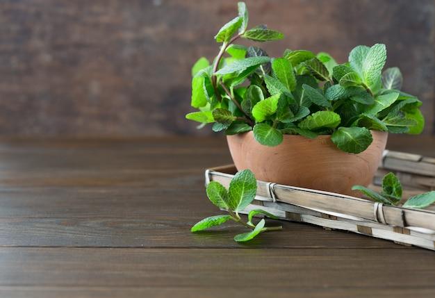 Пачка свежей мяты копья изолированная на деревянной стене. зеленая мята выходит пука. пипермент в шаре, листья травы на деревянном столе.