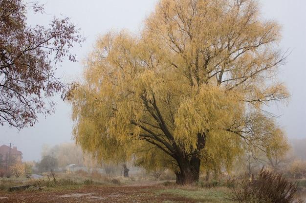 Осенний пейзаж - туманный осенний парк, аллея с голыми деревьями и сухими опавшими оранжевыми осенними листьями. готический осенний пейзаж, осенняя аллея в туманный осенний день