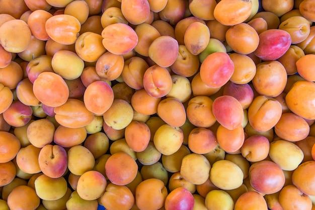 Много свежих плодов абрикосов, сорванных с ветки дерева.