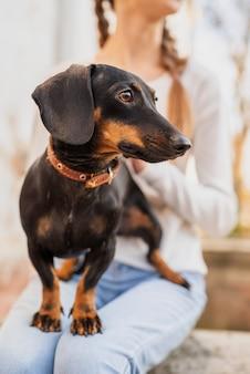 屋外で彼女の所有者の膝の上に立っているダックスフント犬
