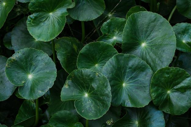 植物の葉の束