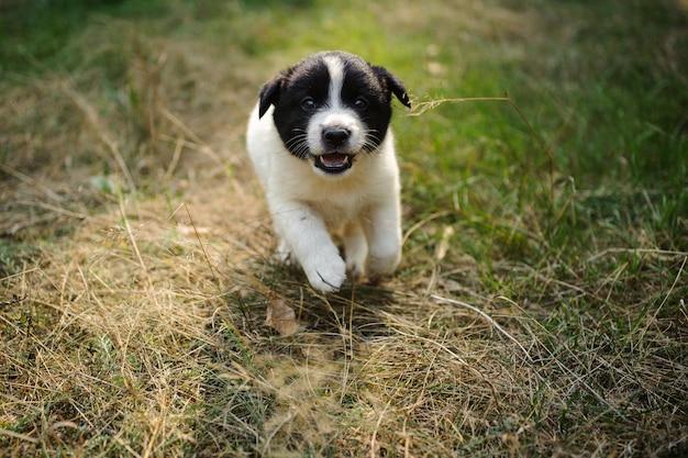 Милый маленький щенок на зеленой и сухой траве