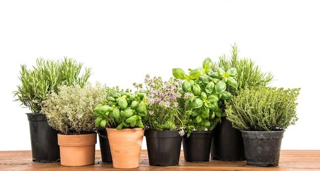 白い背景の上の新鮮な緑の鉢植えなハーブ