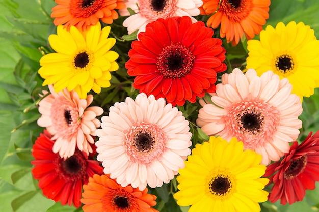ガーベラの花の花束の背景