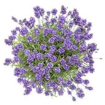 新鮮なラベンダーの花ブーケホワイトトップビュー