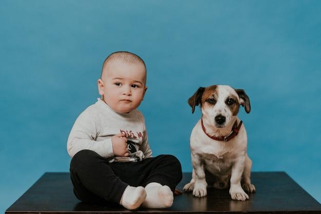 青い背景上の子犬ジャックラッセルとテーブルの上にカジュアルな座っている少年。ペットと子供。