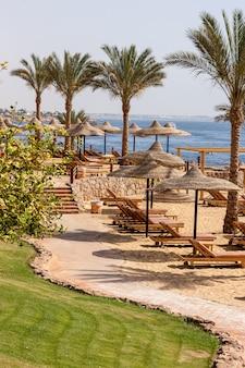 熱帯のエジプトのビーチのヤシの路地