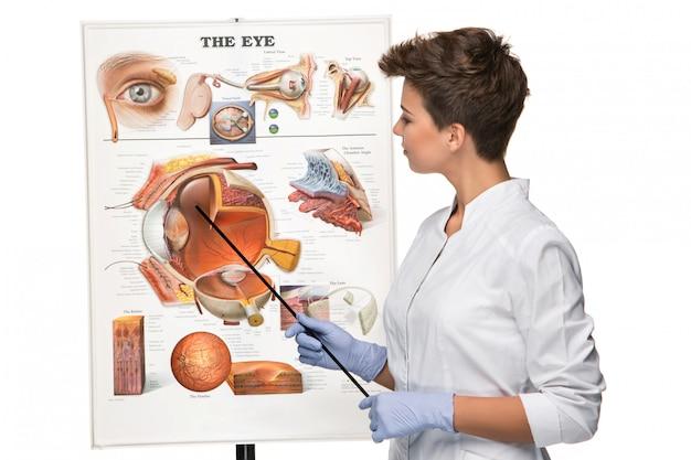 眼科医または眼科医の女性が目の構造について話す