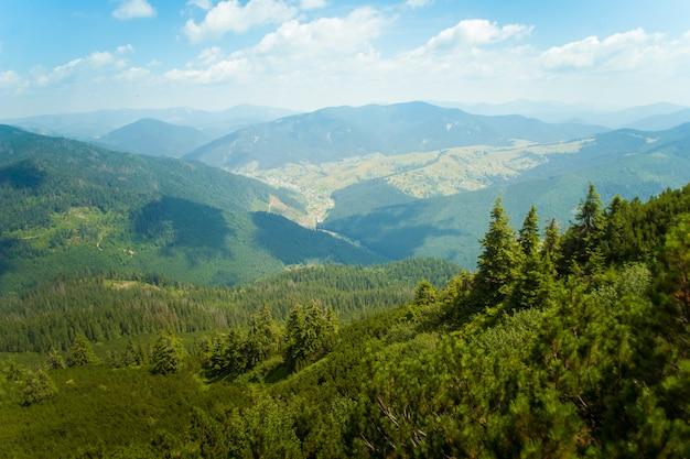 Красивые сосны в горах