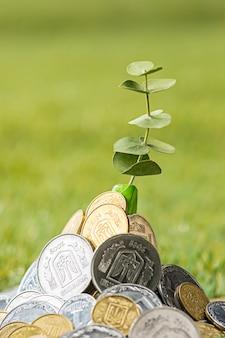 草の上のコイン