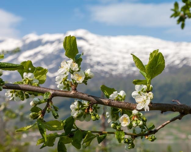 山のある風景します。ノルウェーのフィヨルド