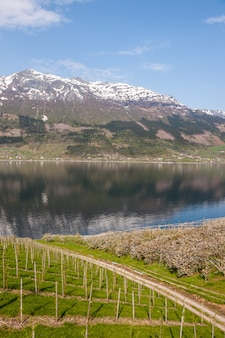ノルウェーのフィヨルドの風光明媚な風景。