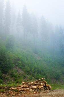 ウクライナのカルパティア山脈の霧の中で美しい緑の松の木。