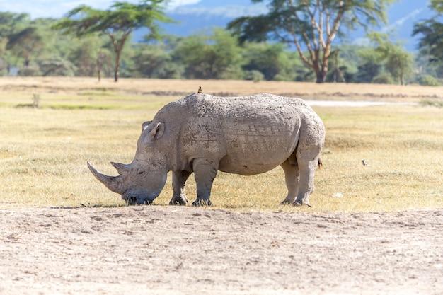 Сафари - носорог