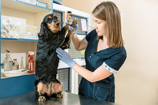 医学、ペットのケア、人々のコンセプト-獣医クリニックでの犬と獣医の医者