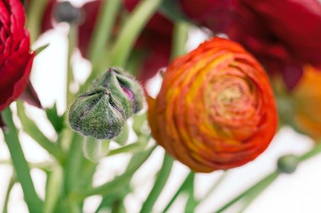 Ранункулюс букет из красных цветов на белом