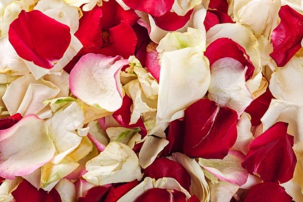 美しい繊細なピンクのバラの花びらの背景テクスチャ