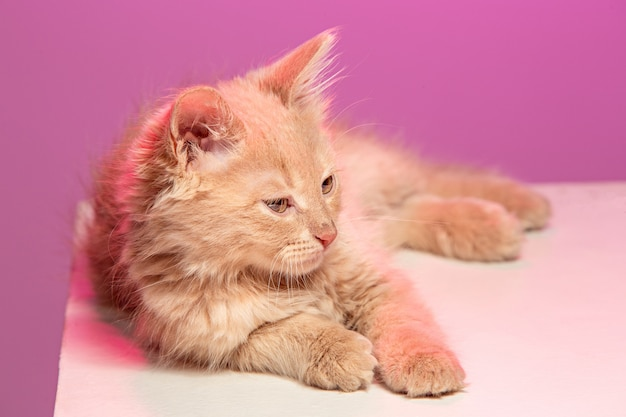 Кот на розовом пространстве