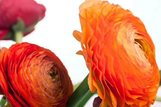 Ранункулюс букет из красных цветов