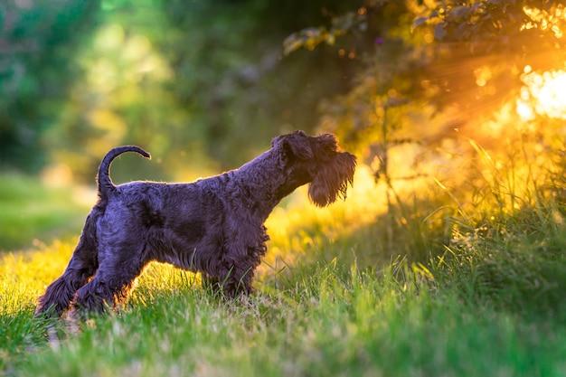 夕暮れ時、森の中を歩く犬
