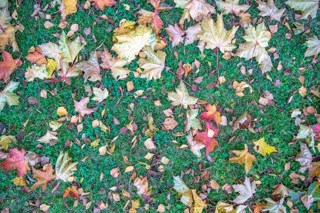 Желтые и красные листья на зеленой траве осенью