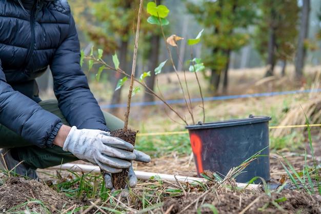 Помощь лесу после экологической катастрофы путем посадки молодых деревьев