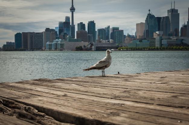 Городской пейзаж торонто в канаде, вид на озеро онтарио