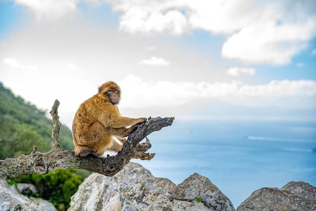 Обезьяна сидит на ветке дерева на скале на берегу моря