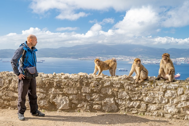 Туриста провоцирует обезьян на дорогу в заповедник