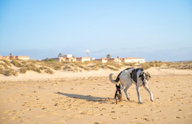 Собаки на прогулке на песчаном морском пляже