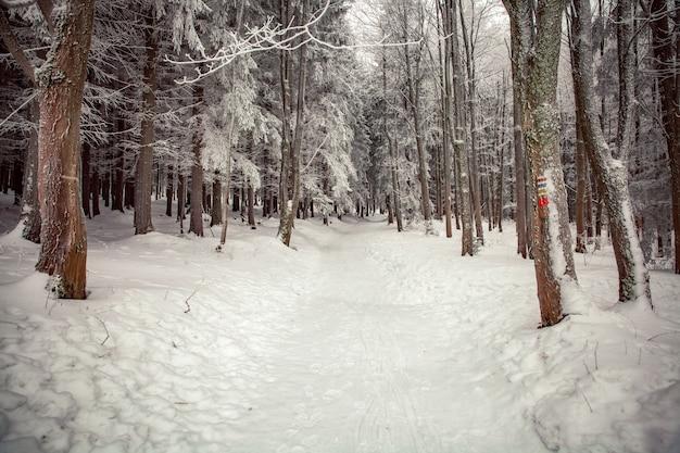 Зимняя сцена в зоне отдыха возле леса. скамейки и снеговики, лесная дорога