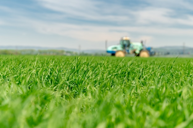 牛のための草のフィールド。背景のフィールドを肥やすトラクター、ぼやけています。コピースペース