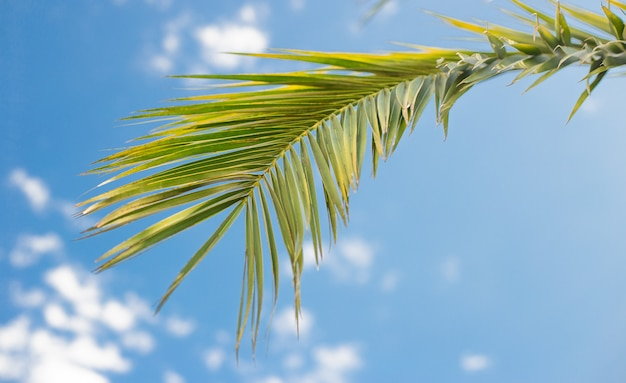 Зеленые пальмовые ветви в голубом небе, свежая листва экзотических деревьев, райский пляж, летние каникулы и концепция праздника