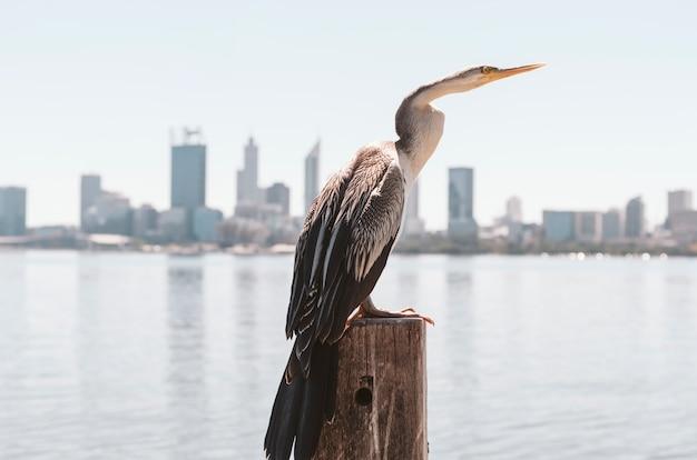 細い首の鳥が都市の川沿いでポーズをとります。