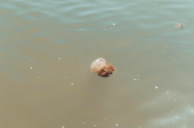 Коричневая, прозрачная и крупная медуза плавно движется по воде.