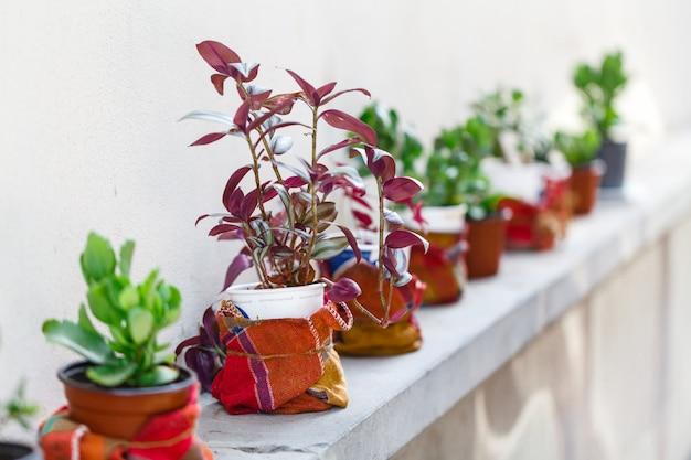 ガーデニング、装飾の概念。通りでコンテナー内の花と植物