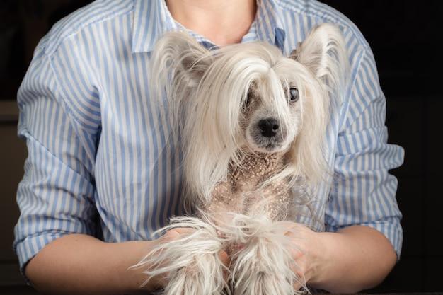 中国の紋付き犬を手に保つ女性