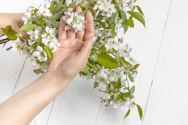 Красивые руки девушки с веткой цветущей яблони