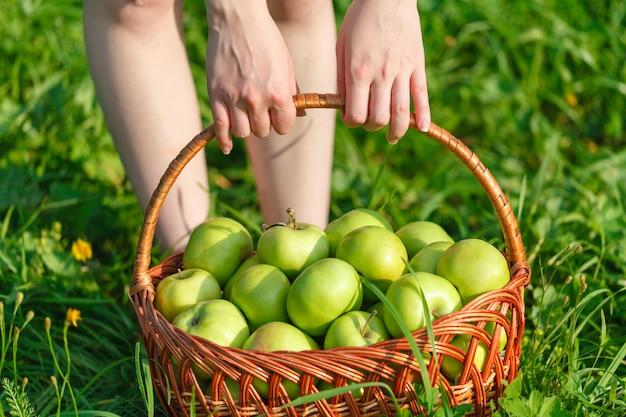 Плетеная корзина с зелеными яблоками на фоне травы