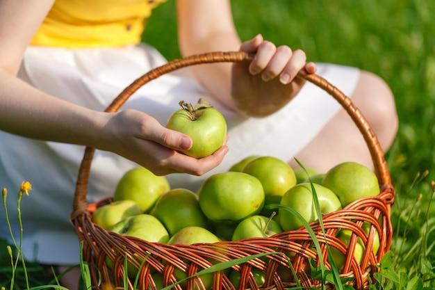 Большие зеленые спелые яблоки в плетеной корзине в конце лета в солнечном свете в зеленой траве в саду