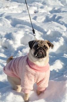 Мопс в снежный день