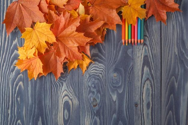 Школьные карандаши лежат на листе стола, различные оттенки, цвет, рядом кленовый лист, символизирует осенний период