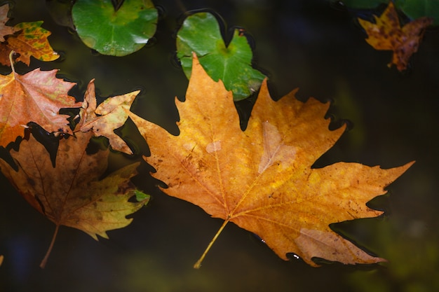 都市公園の水たまりに浮かぶ葉