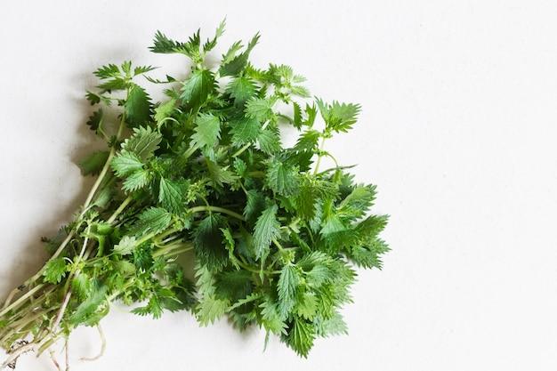 Молодая зеленая крапива. концепция здорового питания. копировать пространство