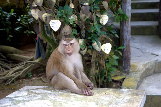 猿は木の下に座っています