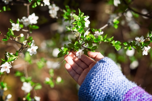 小さな女の子の手の中の桜の花
