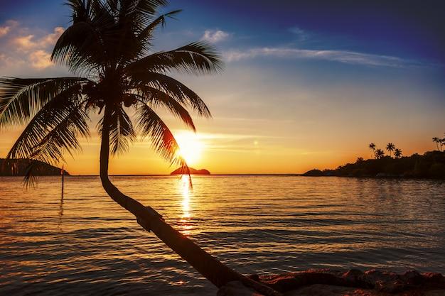 Кокосовая пальма на тропическом побережье над морем на закате, с винтажными тонами, теплые тона