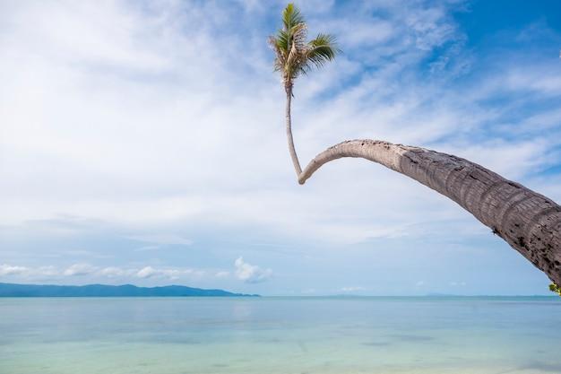 美しい熱帯の異常な明るい楽園の風景、水の上の高いヤシの木